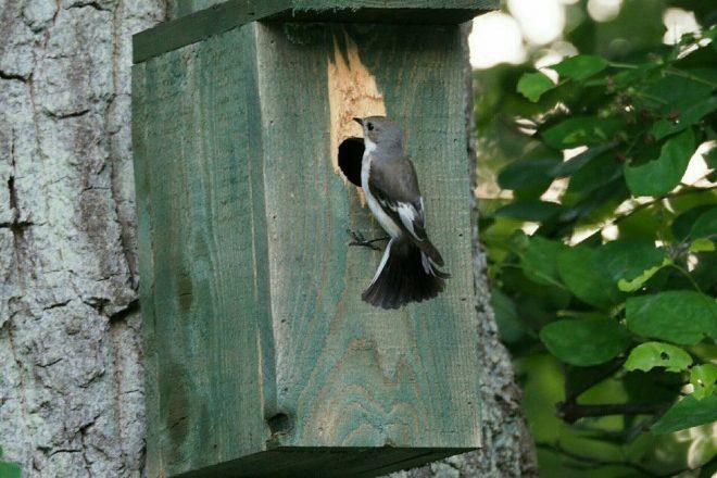 Fotograaf Jannes Bosma Vogel Voor Vogelhuisje