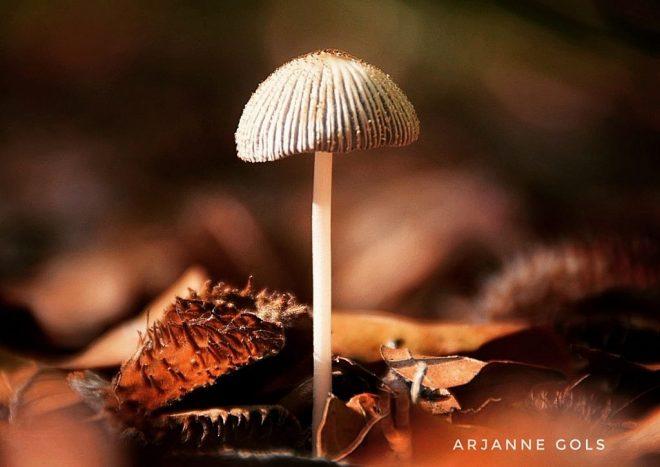 Fotograaf Arjanne Gols