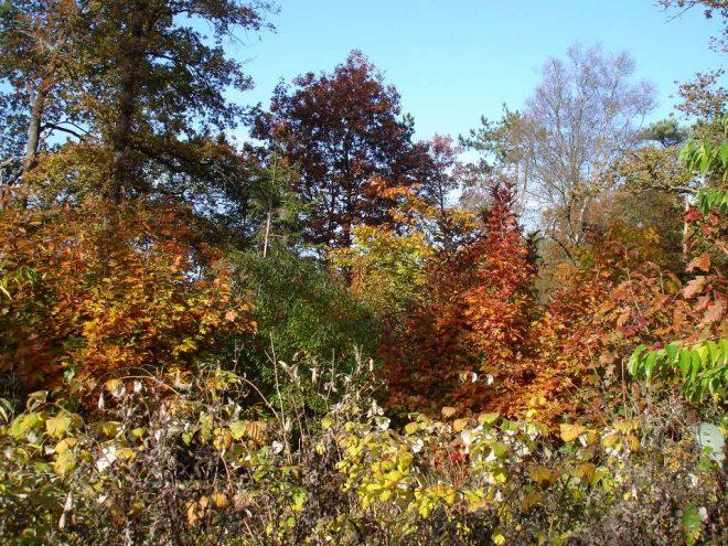 Herfstkleuren tussen Diever en Oude Willem