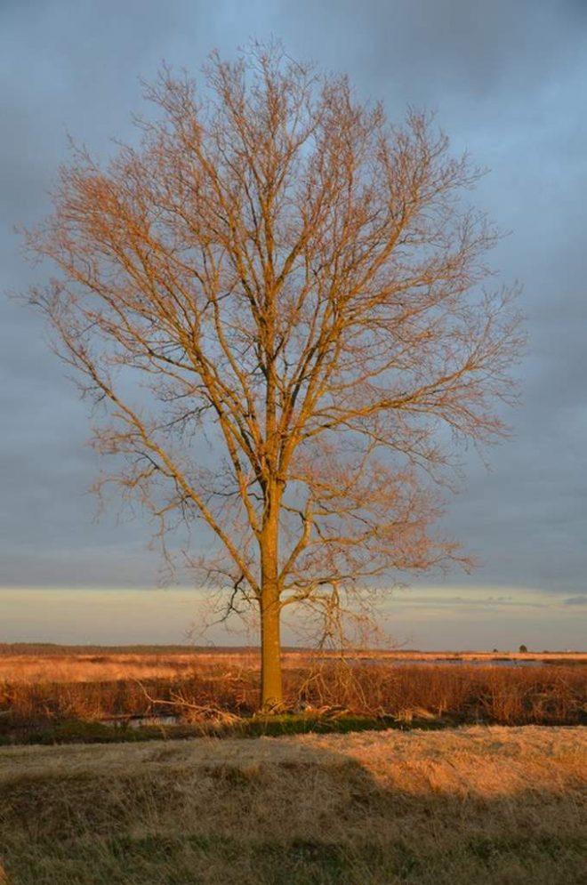 Fotograaf Jannie Guichelaar Groos Fochteloerveen
