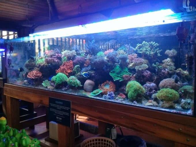 Do Aquariums Have Health benefits? 3