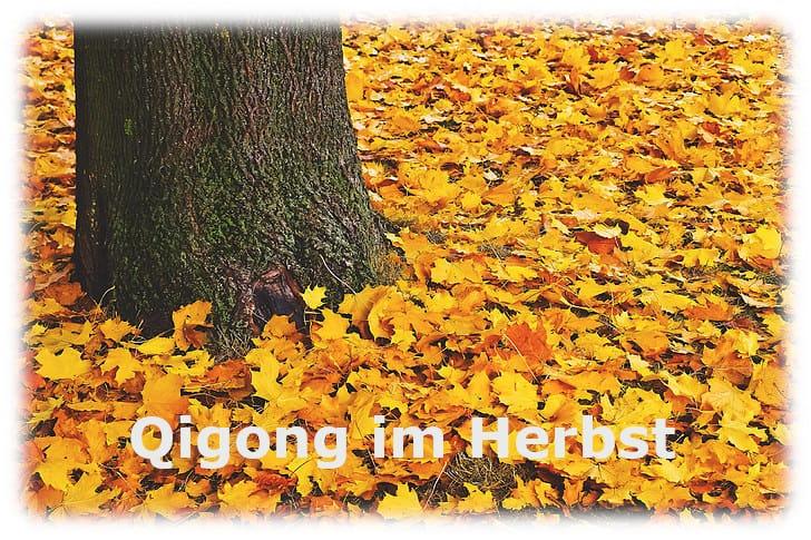 Qigong im Herbst – einfach atmen