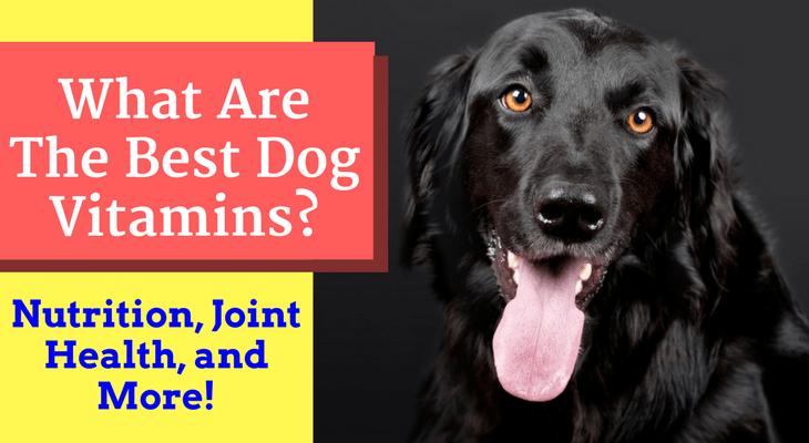 best dog vitamins