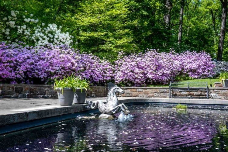 The springtime lavender around the fountain pool at winterthure gardens in the brandywine valley.