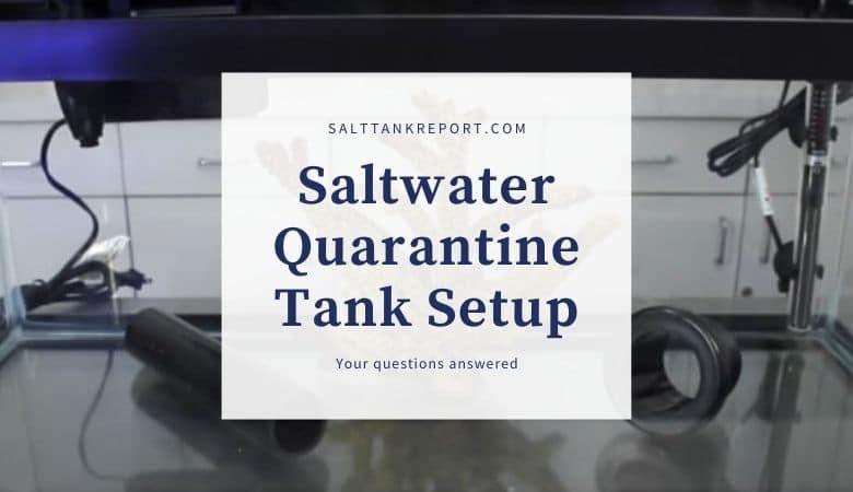 saltwater quarantine tank setup