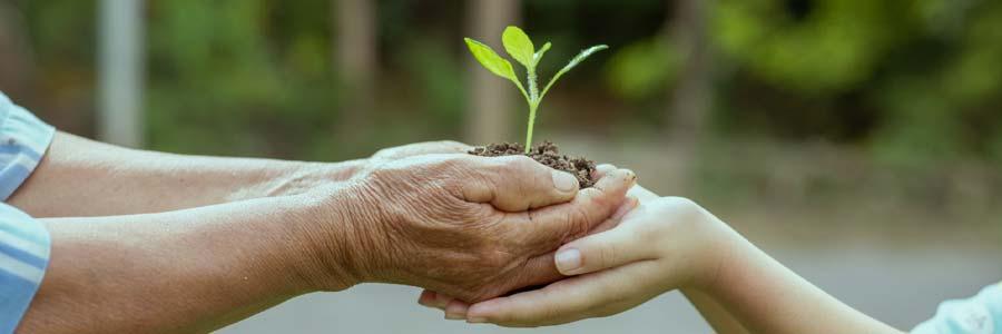 Saving for Grandchildren