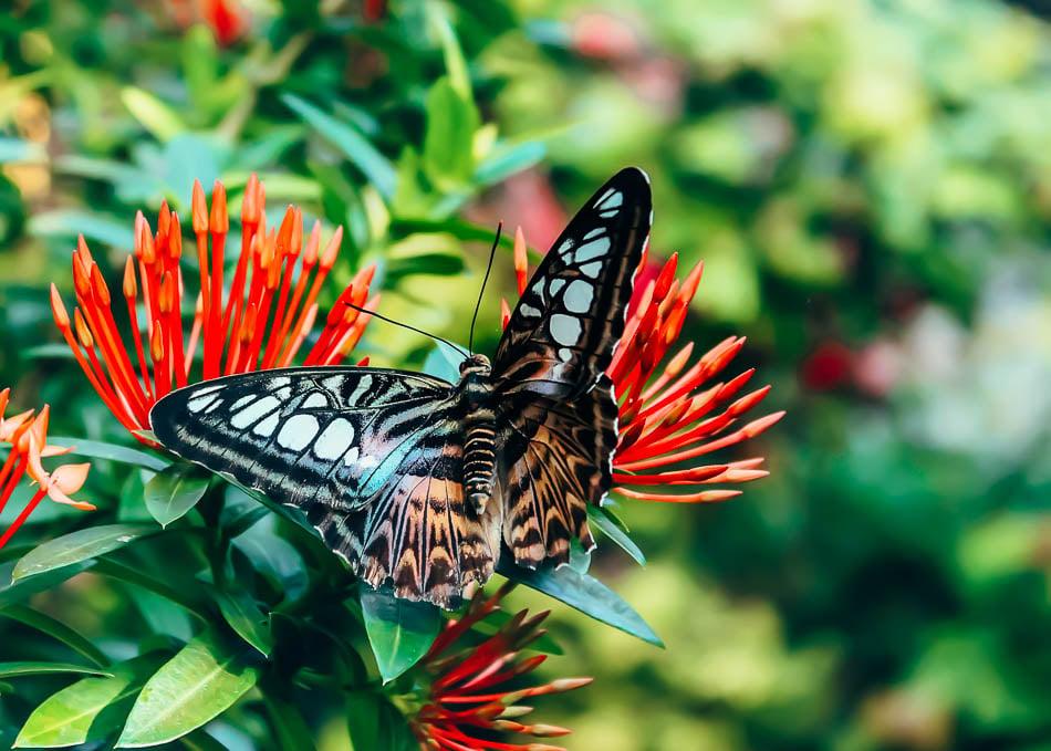 Key West Butterfly Conservatory-2