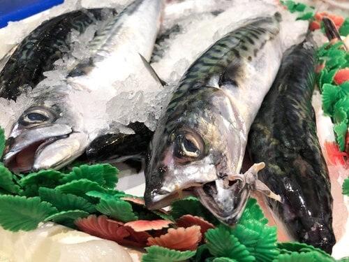 mackerel-2