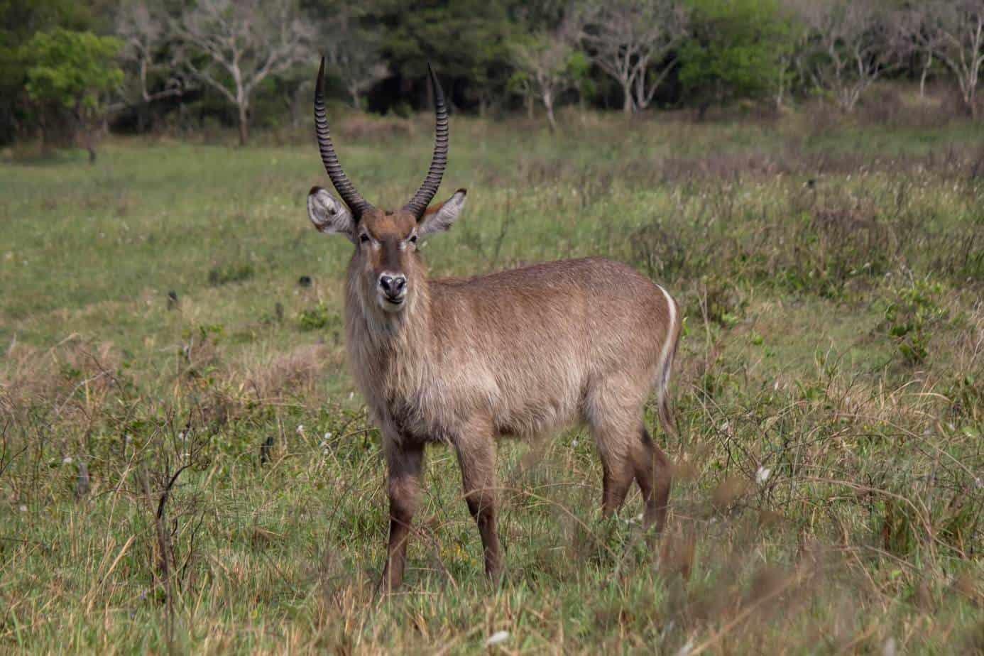 IMG 8804 - Tanzania