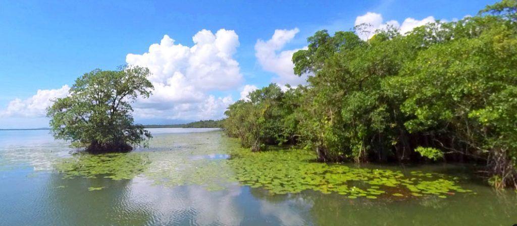 Aguas muy tranquilas y abundante pasto