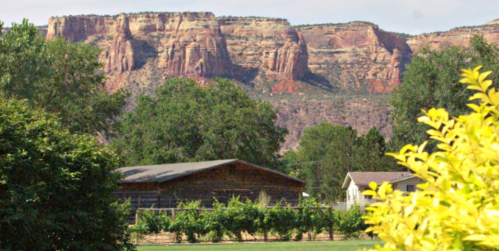 red rock cliffs seem to hang above green lawn with grape vines along fence line