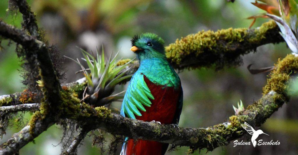 El Biotopo de Purulhá, hábitat del quetzal