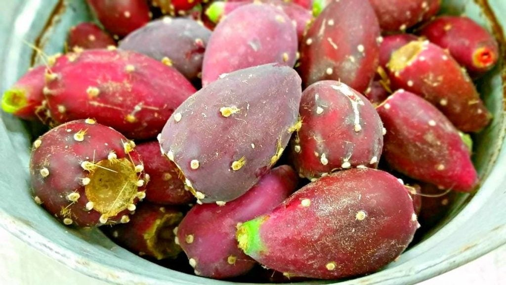 Harvested prickly pears