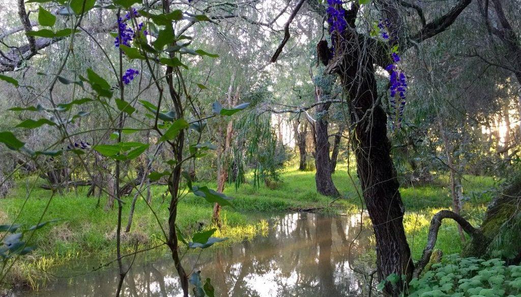 Skrolys Hovea Wetland