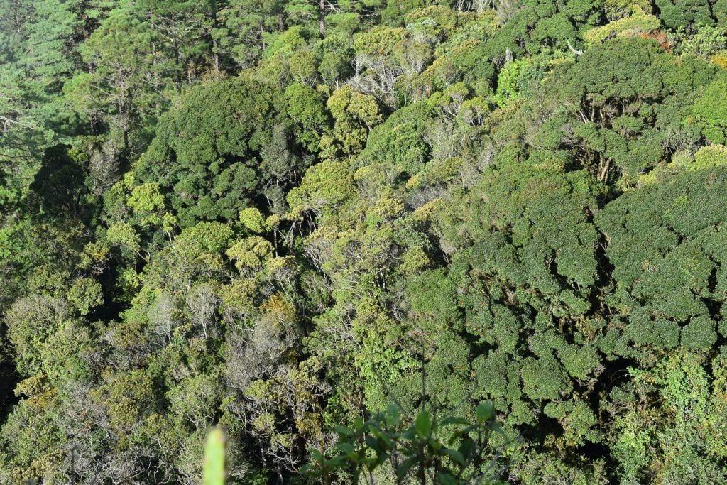 Bosque de la Peña del Ángel en la Sierra de las Minas