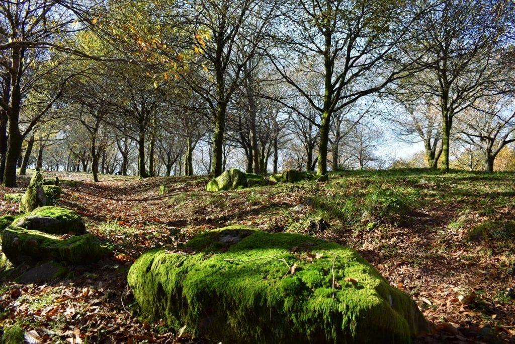 Las lluvias de otoño reverdecen el musgo
