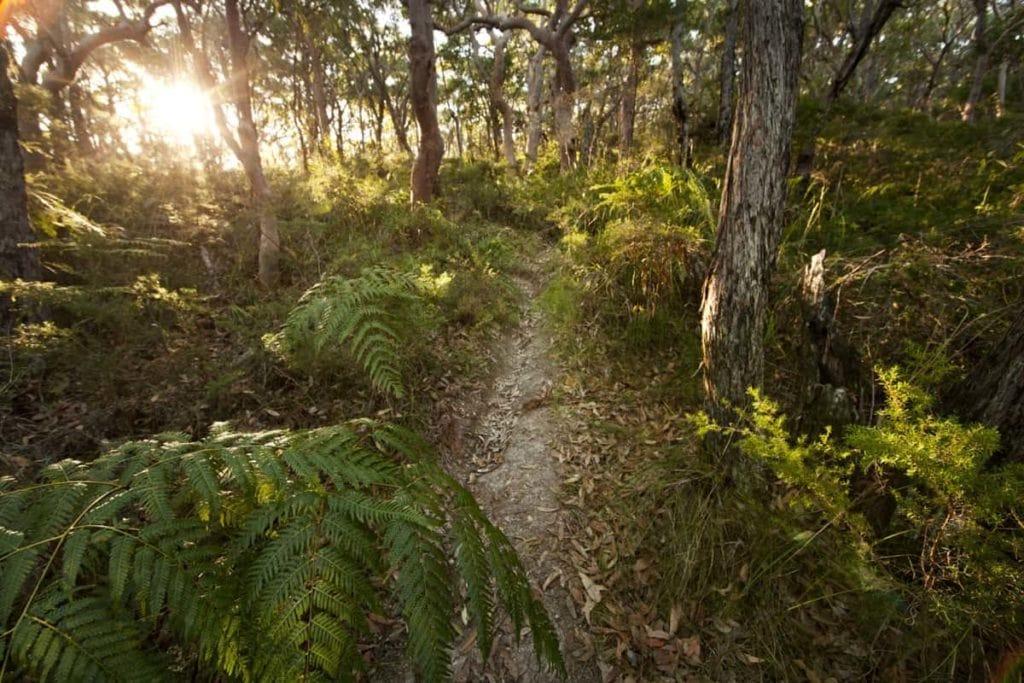 Palms Track at Munmorah State Conservation Area