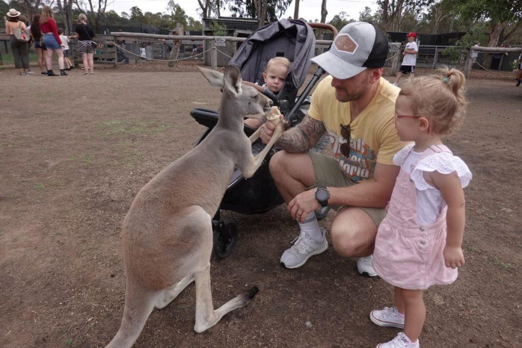 Kangaroo feeding Hunter Valley Zoo
