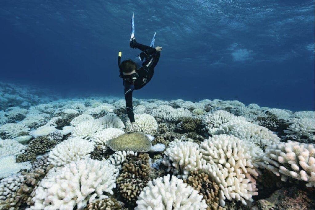 ปะการังฟอกขาว-ทะเล