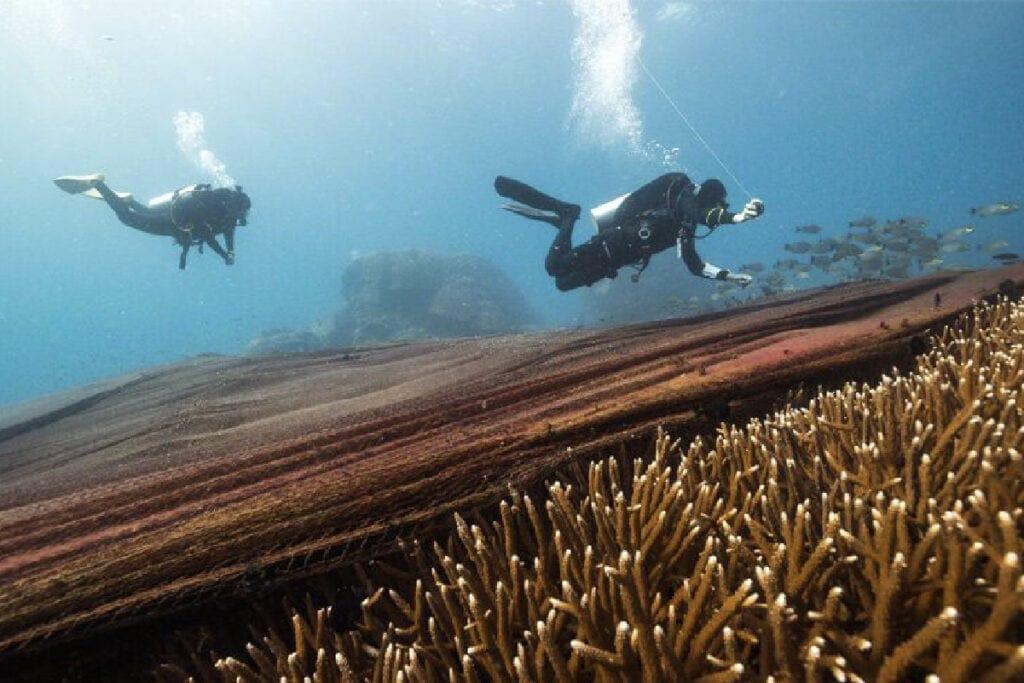 อวนถล่มโลซิน-ปัตตานี-ปะการัง
