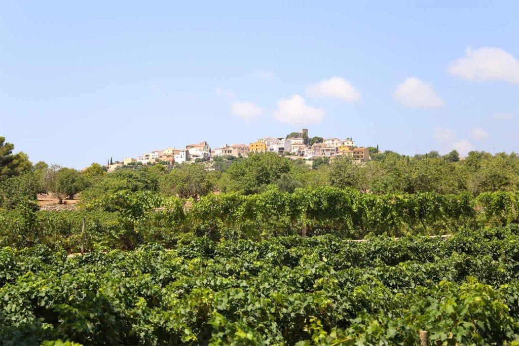 Imatge de les vistes de vinyes i Sant Vicenç de Calders durant la visita al celler al Penedès d'Avgvstvs Forvm