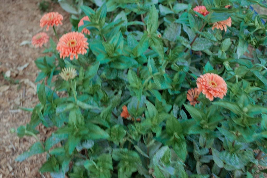 bellaire blooms flower farm kentucky florist