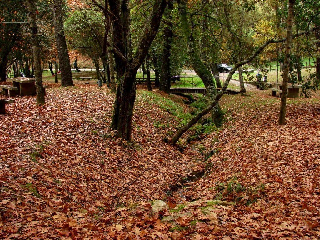 Parque forestal en otoño en Vigo
