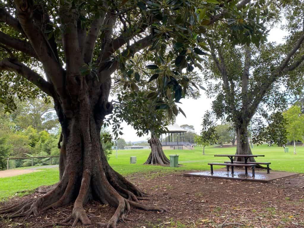 Lambton Park Picnic Spot Newcastle