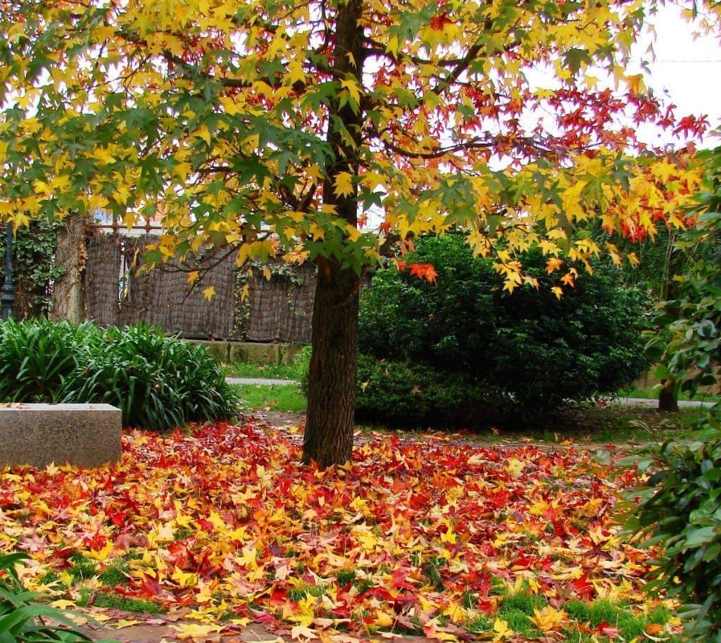 El otoño en un parque urbano en Vigo