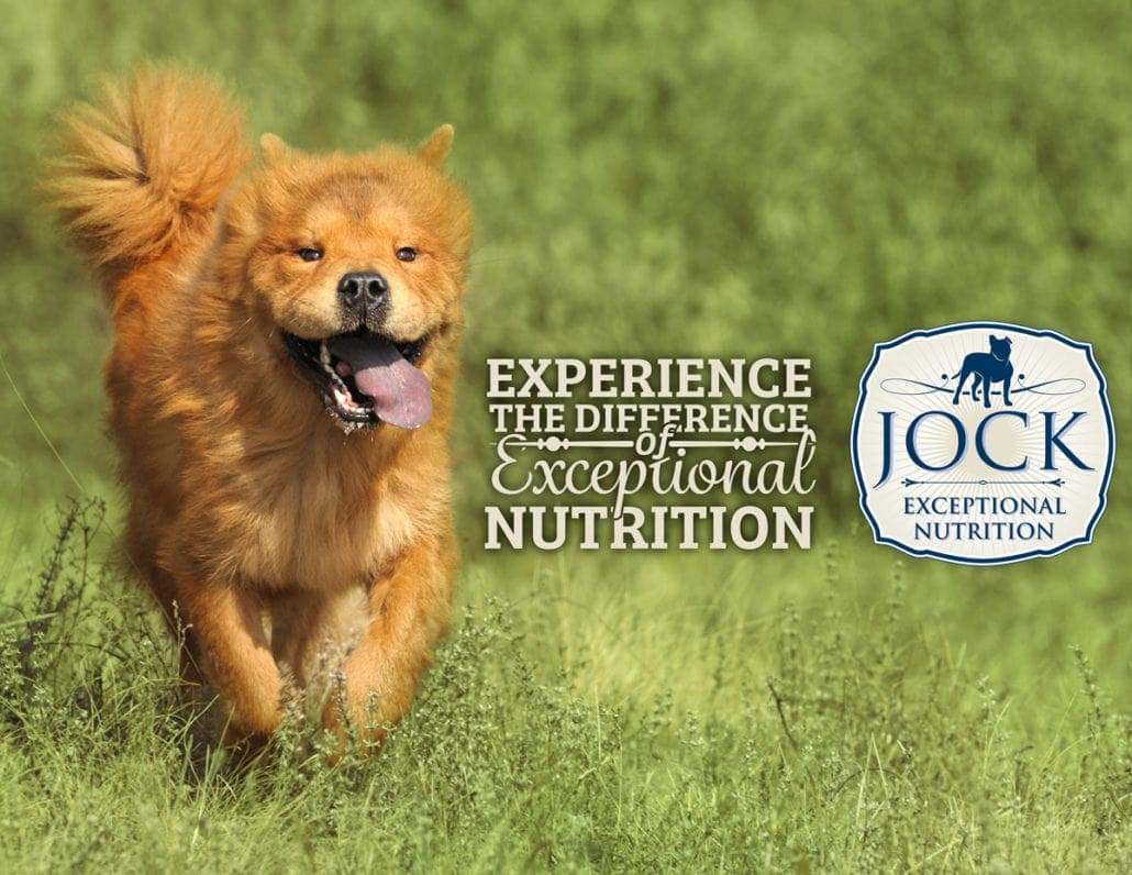 Know your breed - Chow Chow