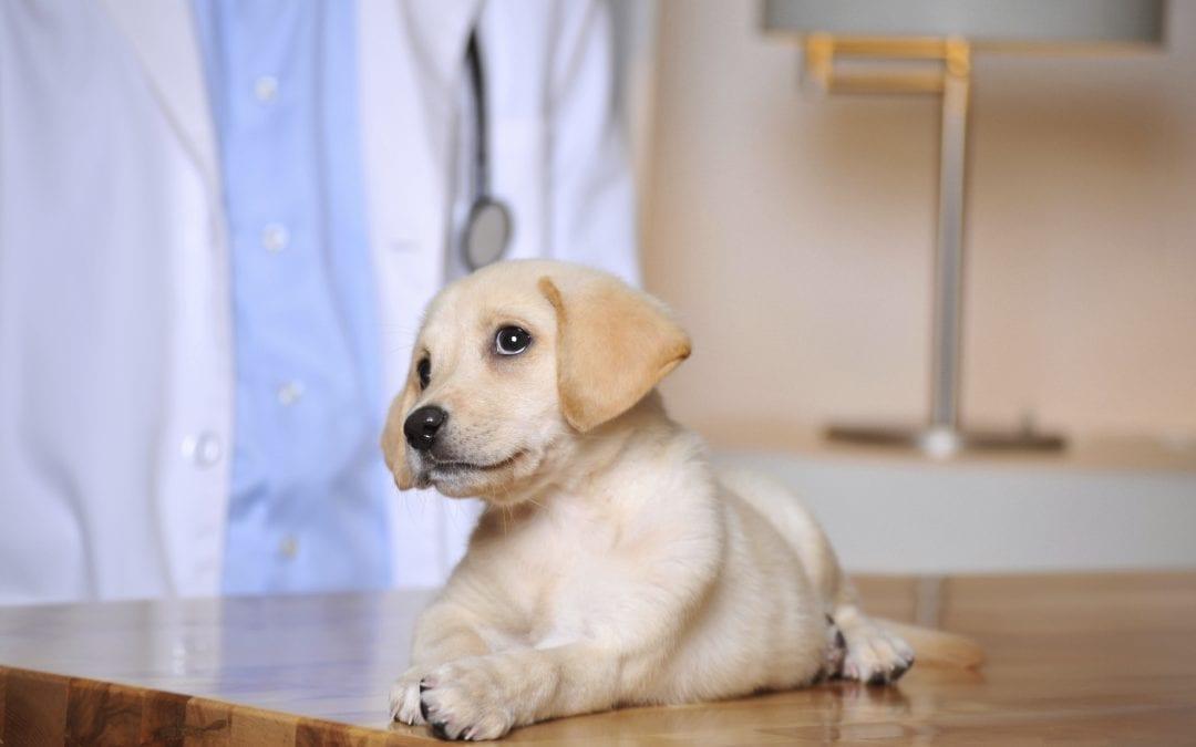 Vet Hospital   Puppy Vaccinations