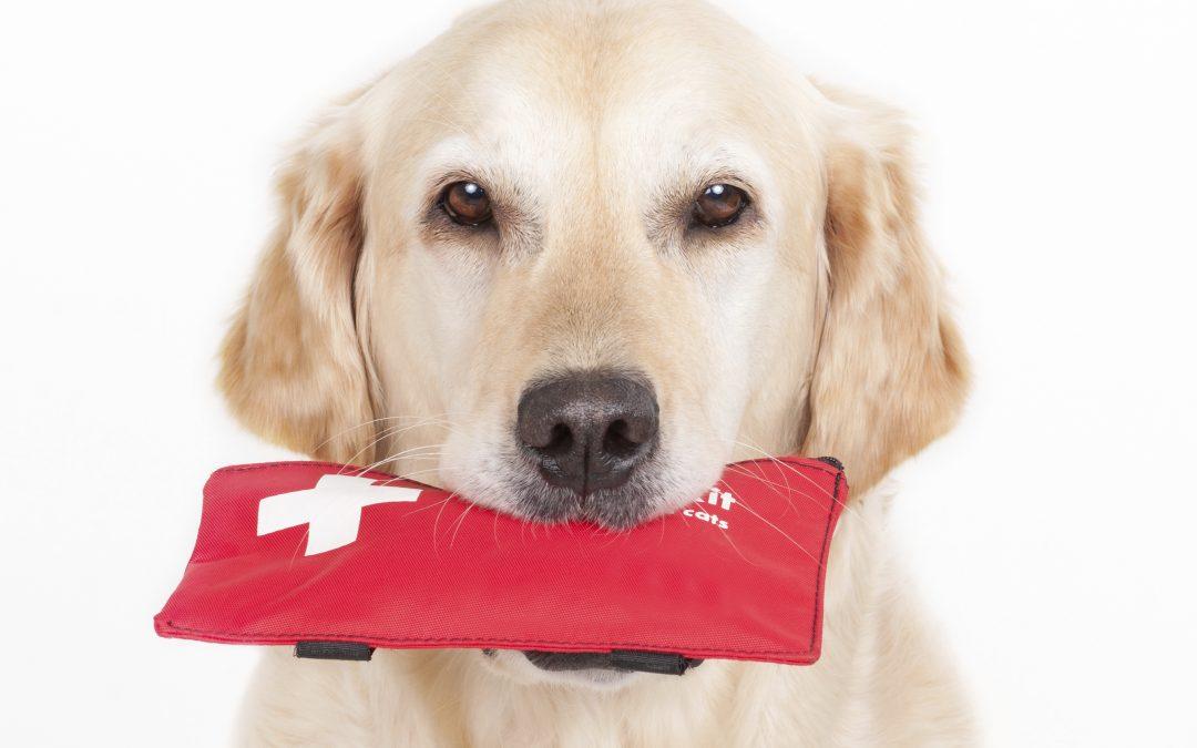Pet Emergency   Xylitol Toxicity