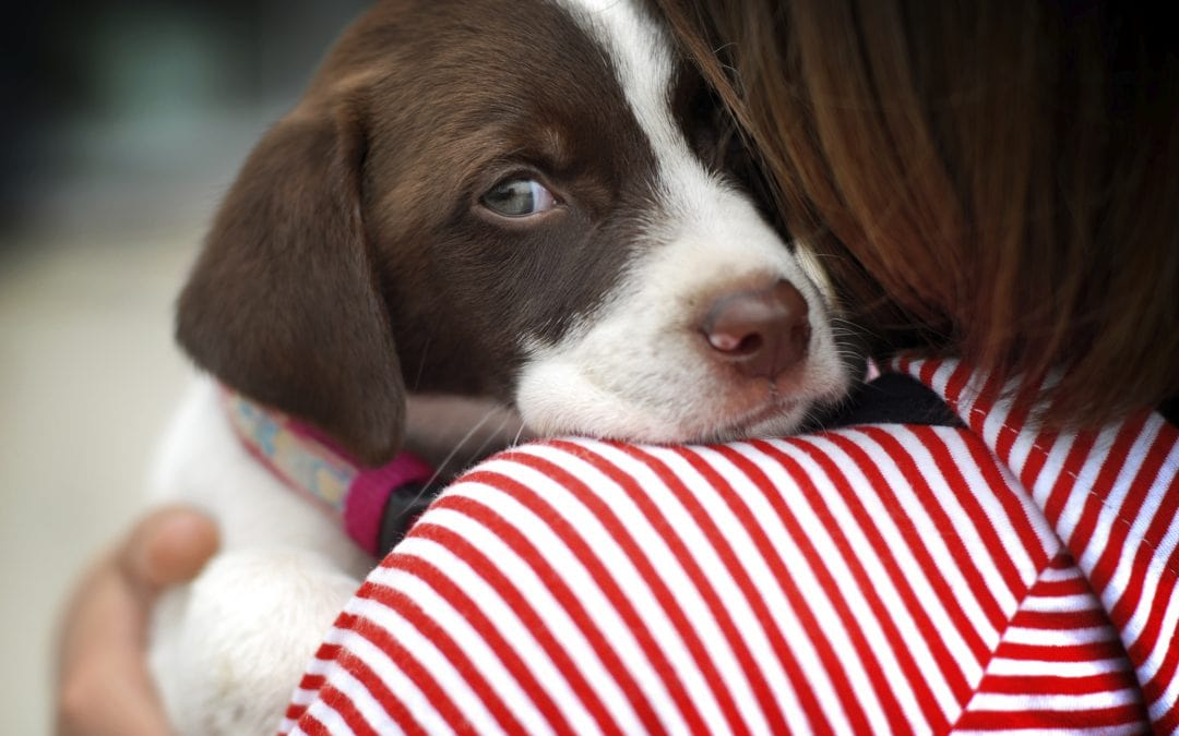 Pet Check Up   Puppy Parvo