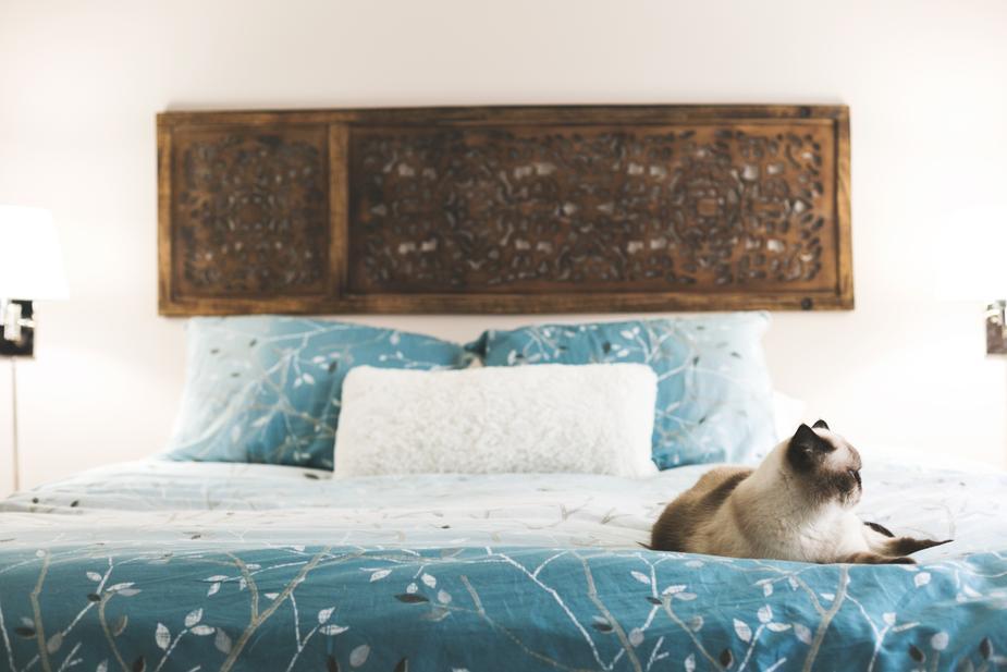 pet care - cat sitting in a corner of a bed