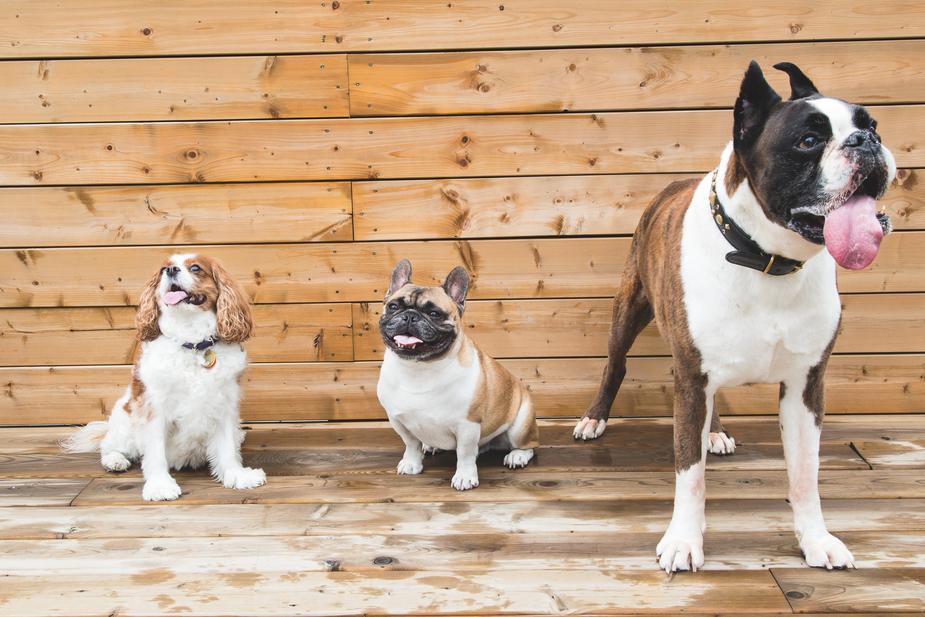 Canine Heat Rash: Symptoms & Treatment