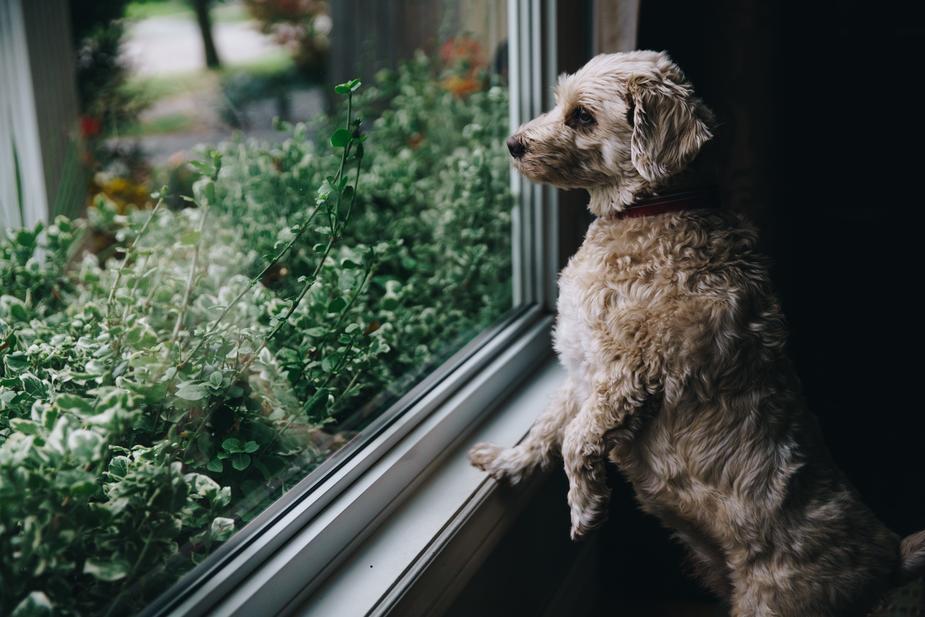 What is Canine Parvovirus?
