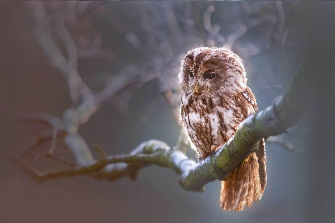 Owl representing the wisdom of the Guru