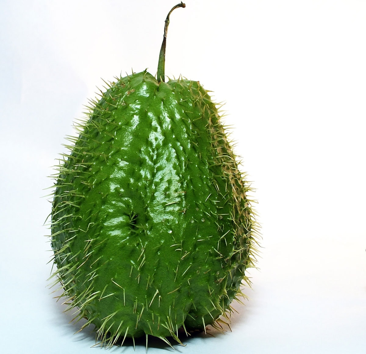 spiny black chayote on a white background