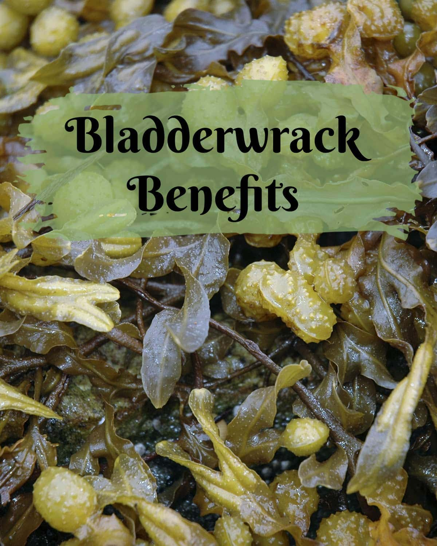 Bladderwrack Benefits