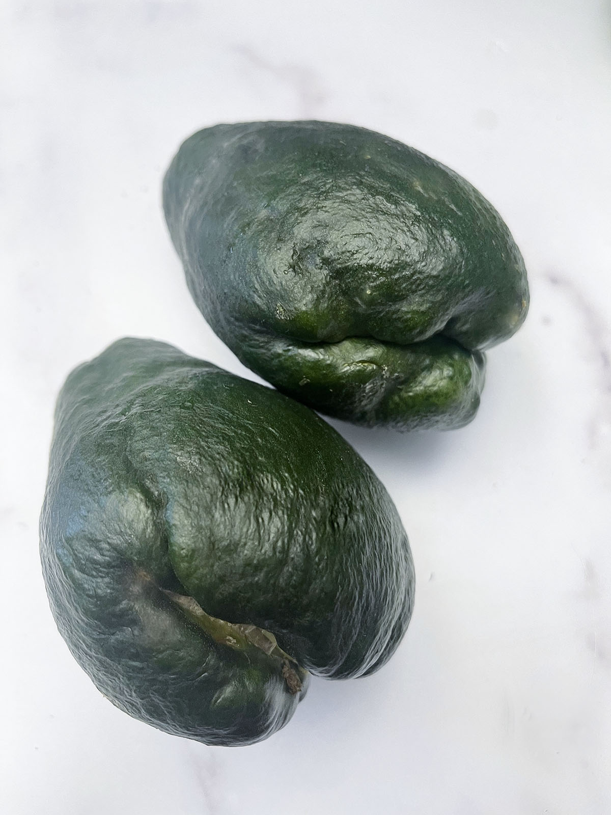 Black chayote on a white background