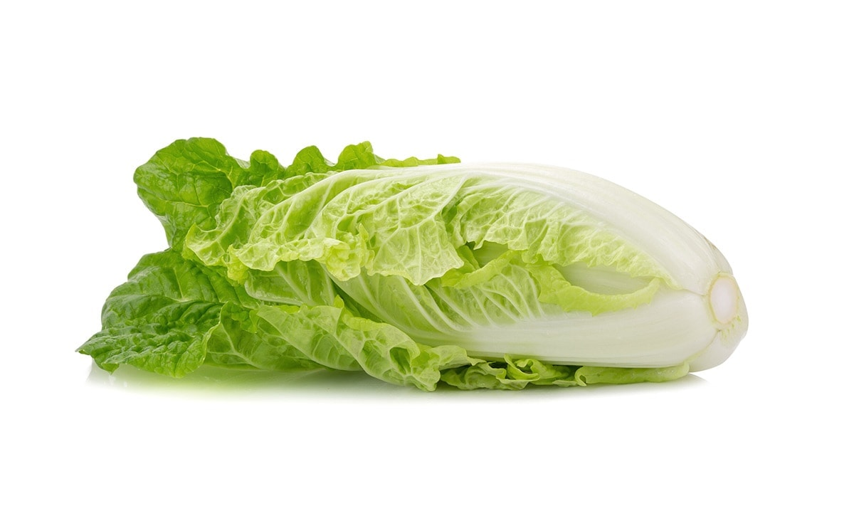 napa cabbage on a white background