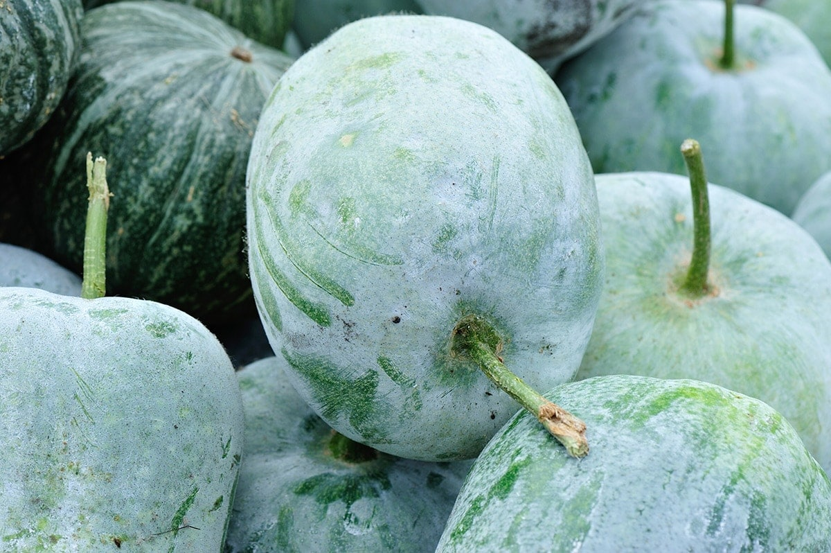 whole winter melons stacked on each other