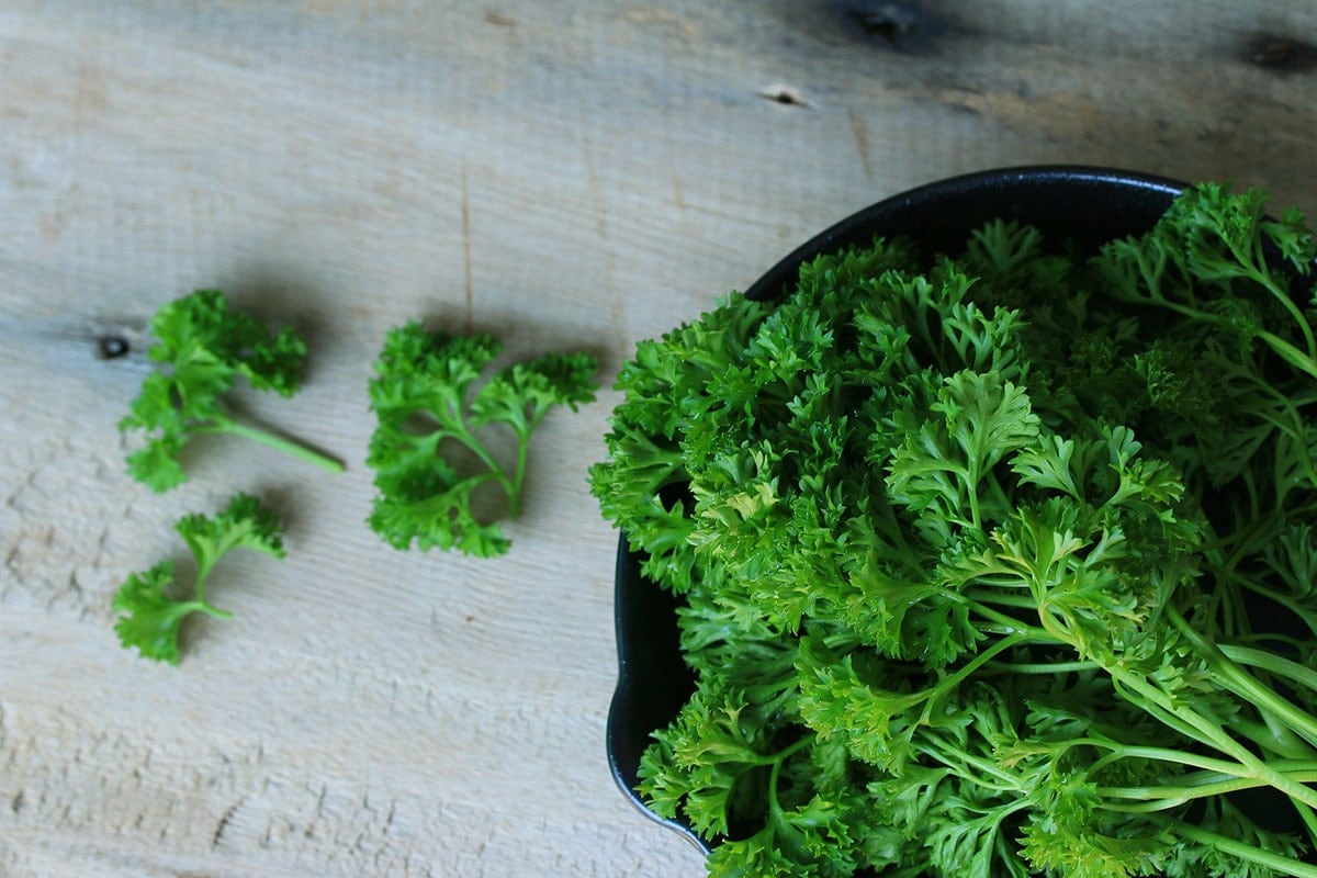 Parsley leaves in a black bowl on a grey background