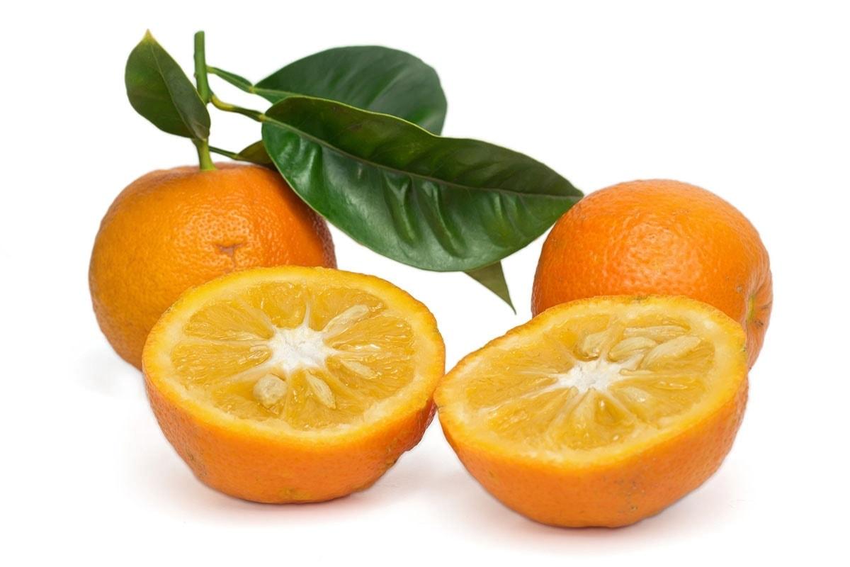 seville oranges on a white background