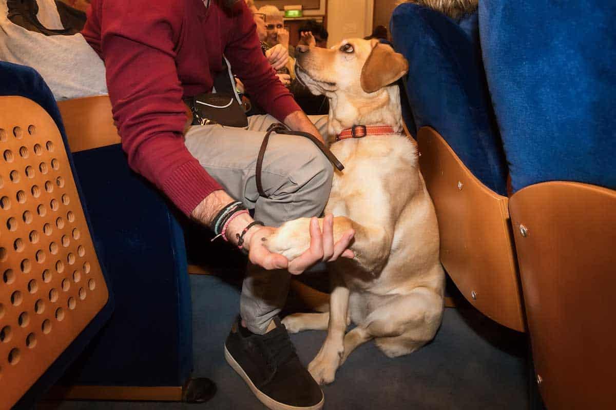emotional support vs service animal