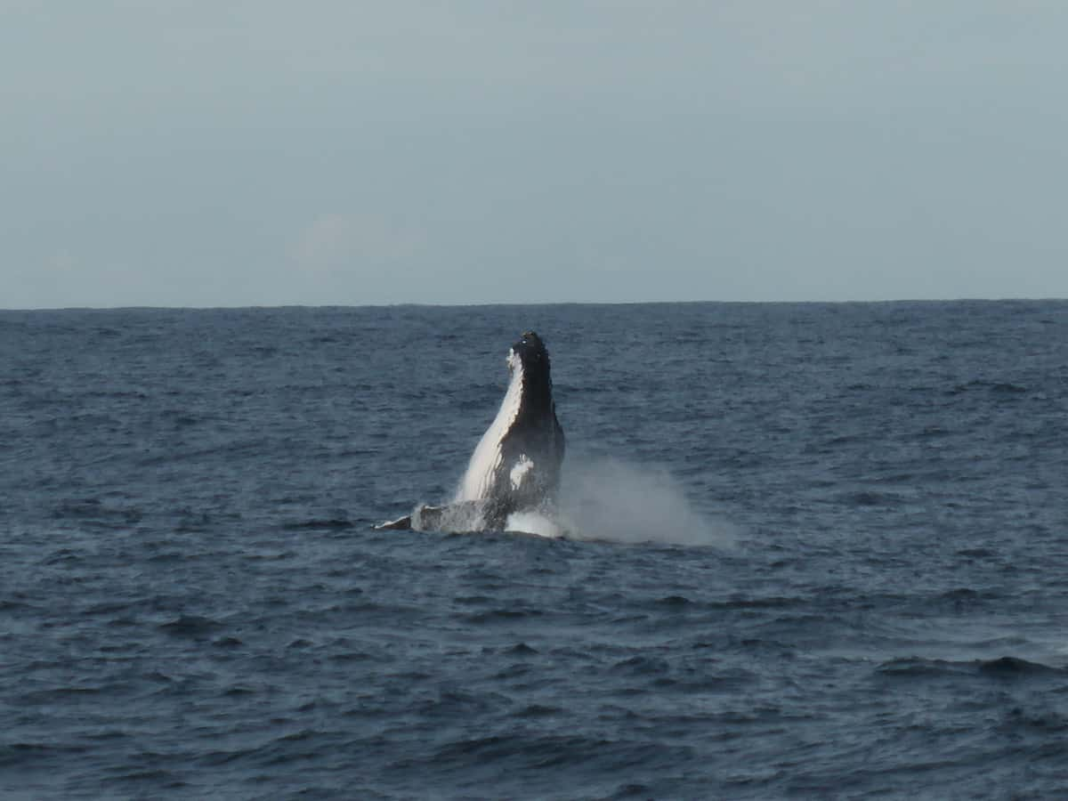 Whale watching Newcastle