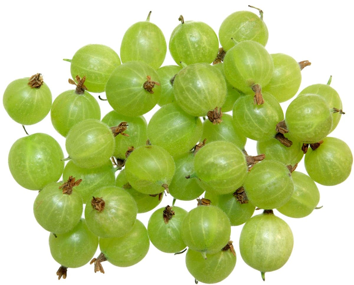 gooseberry fruits on white background