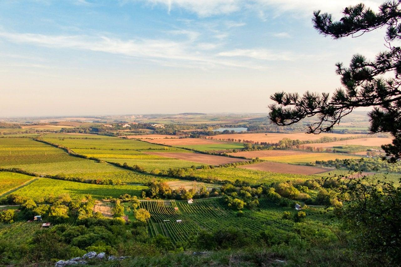 Wine from Czech Republic, Moravia wine country - Veronika Primm