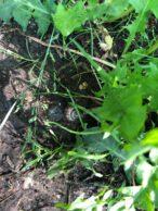 Schnecke auf Waldboden