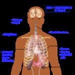 anatomy of the human body, big picture, significant symptoms of diabetes